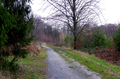 2018-12-22-December-watercolors.-Hike-to-the-Ratingen-forest. File-04.png