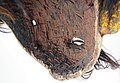 2248 5500c5 detail Chewa Mask (7452389976).jpg
