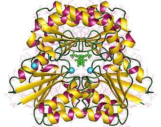 Phosphomannomutase - phosphomannomutase 1, dimer, Human