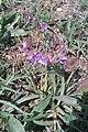 4 گونه های گیاهی روستای ییلاقی فرج آباد.jpg