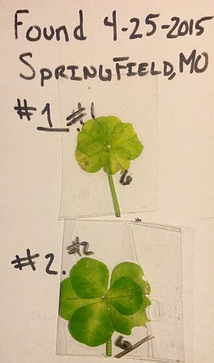 Four-leaf clover - Image: 6 Leaves