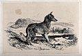 A dog in a landscape, facing right. Etching after E.H. Lands Wellcome V0023225.jpg
