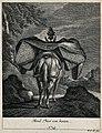 A loaded mule, seen from behind, walking in a mountainous la Wellcome V0021155ER.jpg