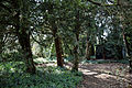 Abbess Roding - woodland path - Essex England 2.jpg