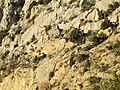 Abella de la Conca. Santa Cauberola 1.JPG
