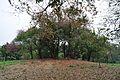Acharya Jagadish Chandra Bose Indian Botanic Garden - Howrah 2011-02-20 1540.JPG