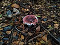 Ada Tree Mushroom Growing - Nature Finds a way.jpg