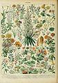 Adolphe Millot fleurs B.jpg