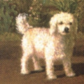Albert Kamehameha's dog (Glen of Imaal terrier).png