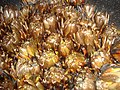 Alcachofas cocinadas a la brasa.jpg