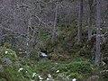 Allt nan Cùileach - geograph.org.uk - 318828.jpg