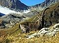 Alpine Ibex.jpg
