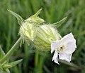 Amoj - flower.jpg