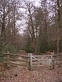 An entrance to the east side of the Brockishill Inclosure, New Forest - geograph.org.uk - 102422.jpg
