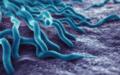 Anaplasmosis bacteria.png