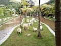 Animal Theme Park.jpg