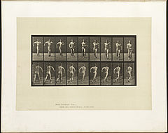 Animal locomotion. Plate 3 (Boston Public Library).jpg