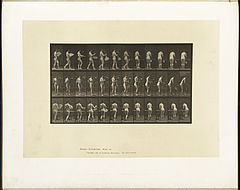 Animal locomotion. Plate 441 (Boston Public Library).jpg
