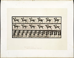 Animal locomotion. Plate 621 (Boston Public Library).jpg