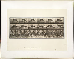 Animal locomotion. Plate 681 (Boston Public Library).jpg