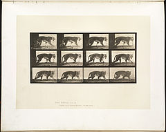 Animal locomotion. Plate 729 (Boston Public Library).jpg