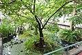 Annona glabra - Brooklyn Botanic Garden - Brooklyn, NY - DSC08033.JPG