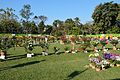 Annual Flower Show - Agri-Horticultural Society of India - Alipore - Kolkata 2013-02-10 4863.JPG