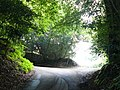 Anstie Lane, Coldharbour, Surrey - geograph.org.uk - 1404657.jpg