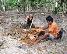 ayahuasca wikipedia la enciclopedia libre