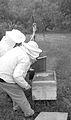 Apiculteurs - Installant du sirop sur un nourisseur - 2.jpg