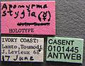 Apomyrma stygia casent0101445 label 1.jpg