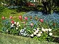 April - Spring Botanischer Garten Freiburg - 2016 - panoramio.jpg