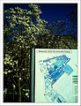April Magnolia grandiflora Freiburg Botanischer Garten - Master Botany Photography 2013 - panoramio (2).jpg