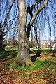 Arboretum Zürich 2011-03-23 14-35-22.JPG