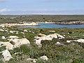 Arenal de Son Saura 10.jpg