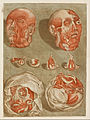 Arnauld Gautier d'Agoty - Four Dissected Heads with Details of Eyes - Google Art Project.jpg