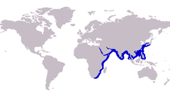 Approximate range of the cleftbelly trevally