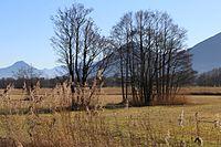 Auer Weidmoos Bad Feilnbach-3.jpg