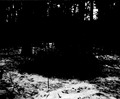 Ausruhen einer Gruppe Soldaten im Wald - CH-BAR - 3236731.tif