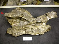 Australodocus.jpeg