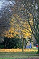 Autumn Maple and Bike Lesson - geograph.org.uk - 1047774.jpg