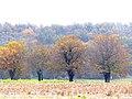 Autumn P1030597a.jpg