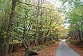 Autumn in Five Hundred Acre Wood, by the Wealdway - geograph.org.uk - 1585001.jpg