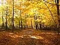 Autumntreeseasternus.JPG