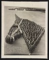 Auxiliary Remount Depot No 326 Camp Cody NM in a symbolic horse head 11770v.jpg