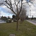 Avenida de árboles como recuerdo de varias promociones.png