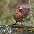 Backyard Bird (49814695042).jpg