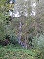 Bad Säckingen 2012-10-13 Mattes (1).JPG