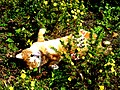 Bad Sobernheim – Bonsai-Tiger beim Sonnenbad..... - panoramio.jpg