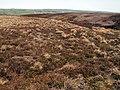 Bance Edge on Thurlstone Moor - geograph.org.uk - 416107.jpg